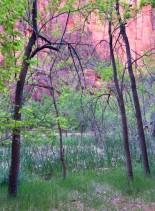 cropped-pinkkarylee.jpg